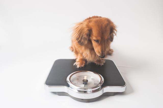 なぜ私が体重計に乗らないのか?